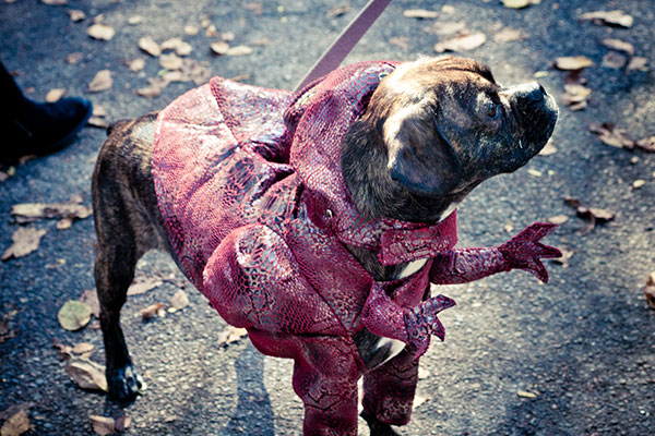 Geishas, Brooklyn Nets, And Other Gems From The Halloween Dog Parade