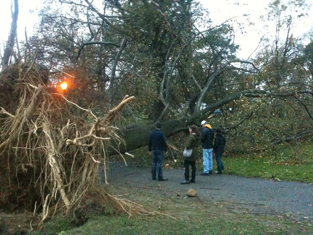 Photo: Giant Trees Down In Prospect Park