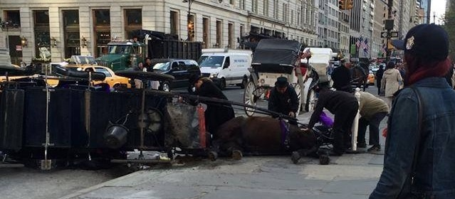 a carriage horse collapses on the street outside Central Park in NYC